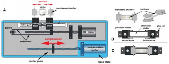 Schematic of the strain/compression (SC) device